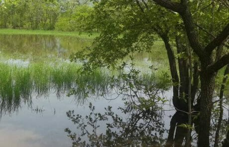 Wo es sonst sandig und staubtrocken ist, wachsen Gräser und Bäume und Büsche sind saftig grün.