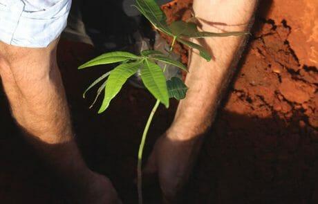 Pflanzen des ersten Baumes auf unserem Grundstück (Nussbaum)