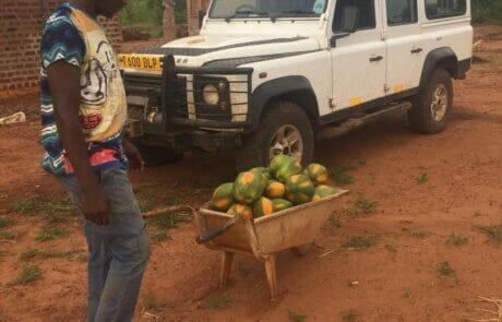 Papaya-Harvest
